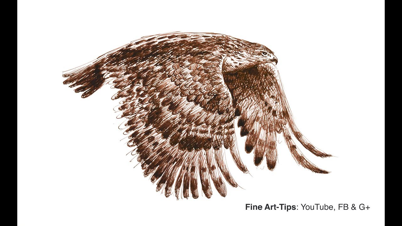 How To Draw A Flying Hawk With Fountain Pen