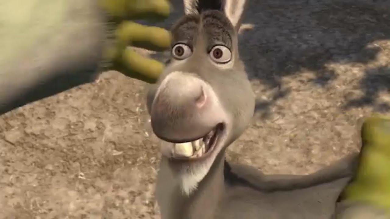 Donkey From Shrek Smiling