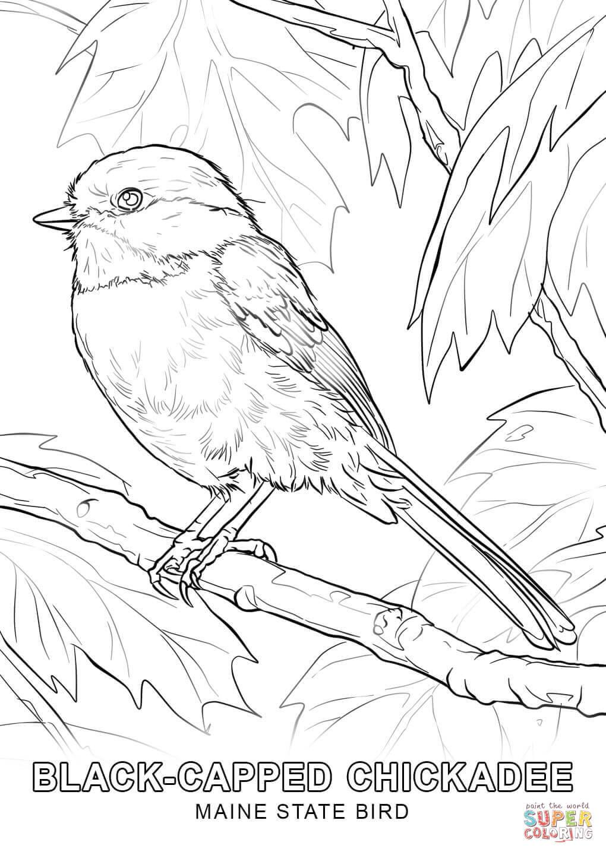 Alabama State Bird Coloring Page