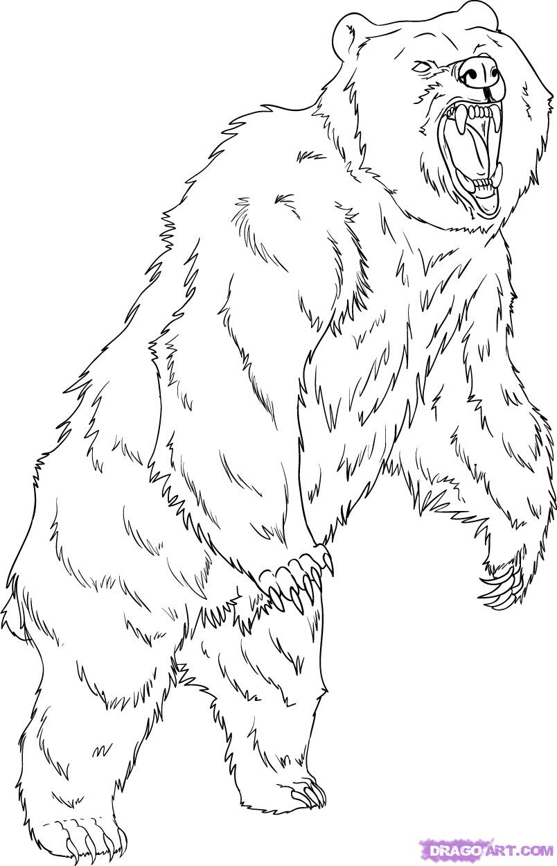 Mean Bear Coloring Pages – Color Bros