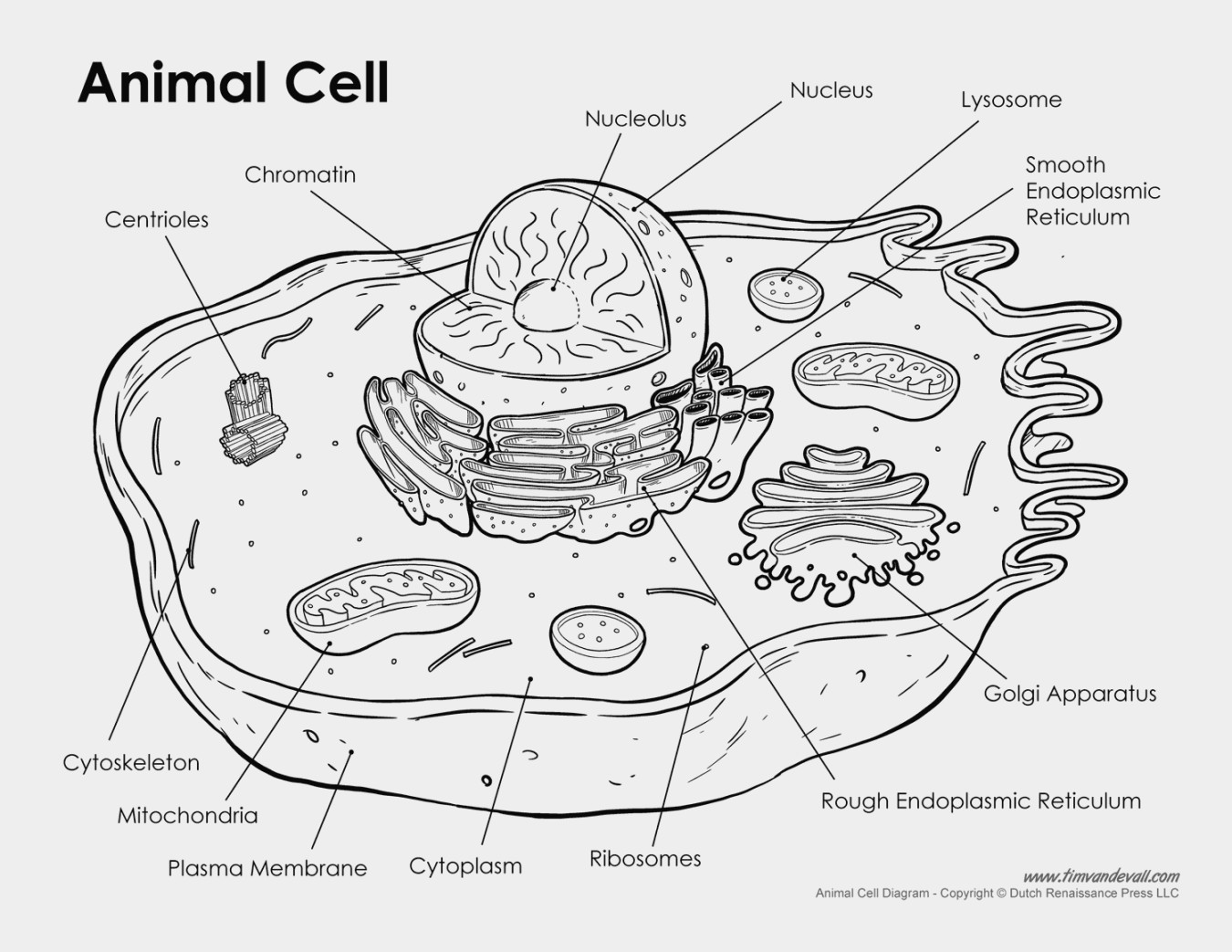 Unthinkable Plant Cell Coloring Detailed Color Diagram Of A Wiring