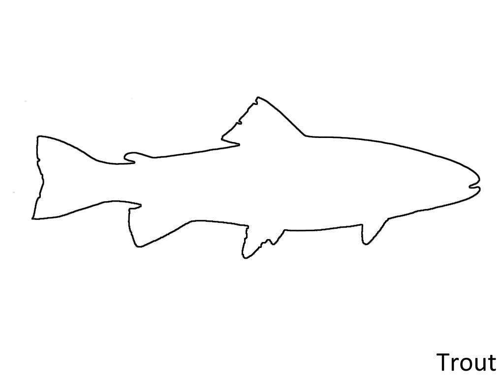 26 Images Of Trout Outline Template