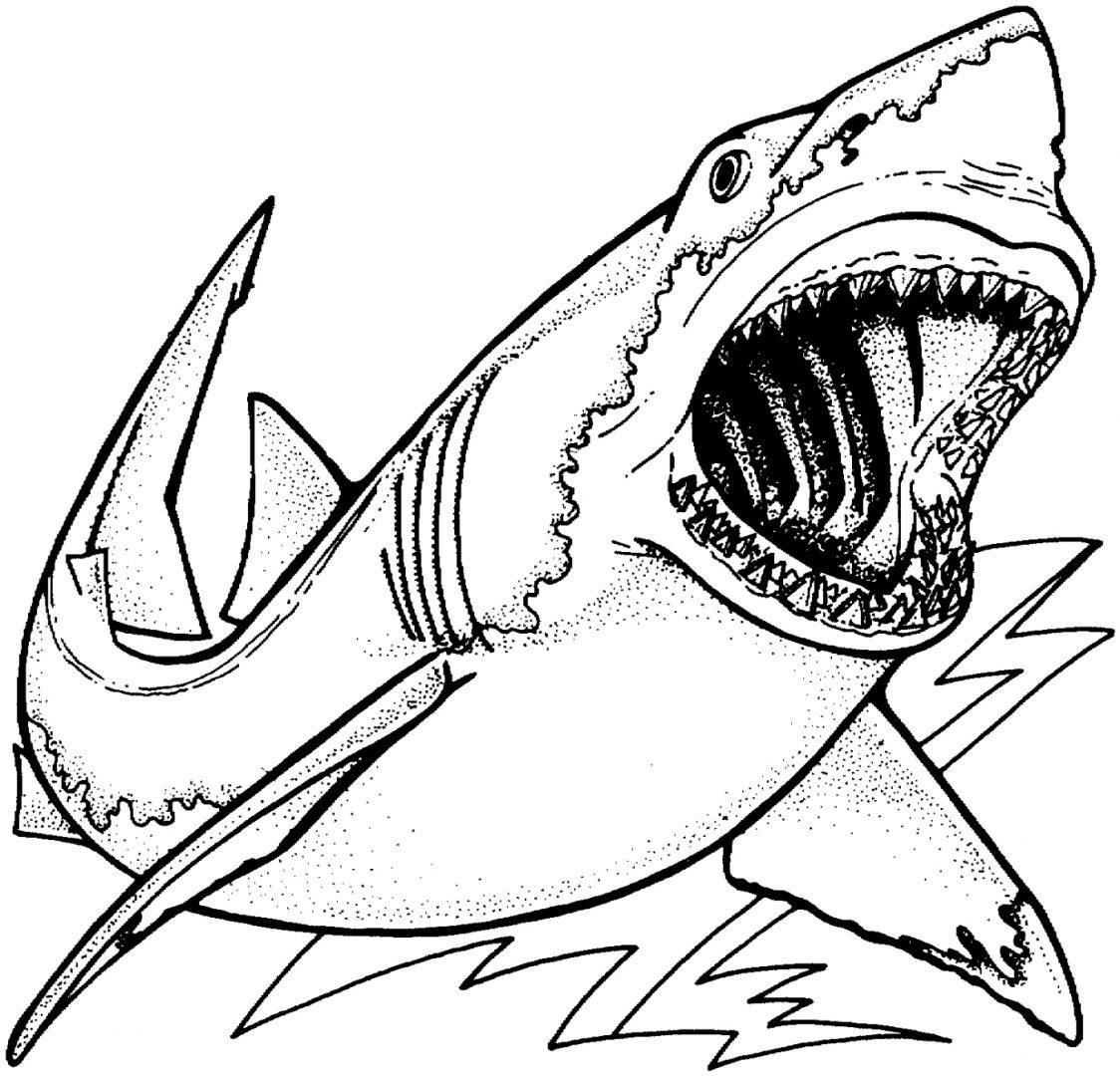 Galería De Imágenes  Dibujos De Tiburones