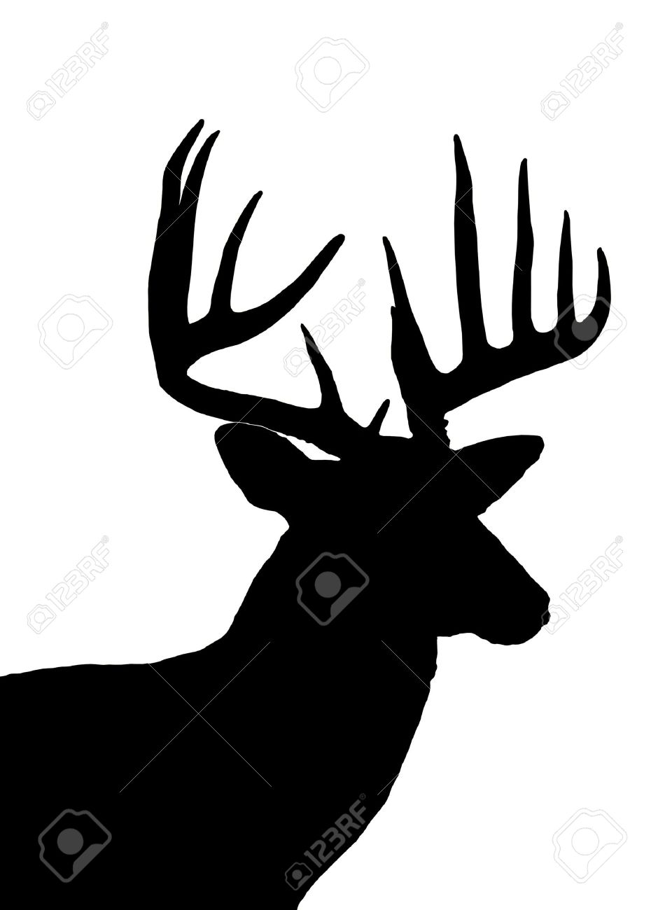 Whitetail Deer Head Silhouette Isolated Stock Photo, Picture And