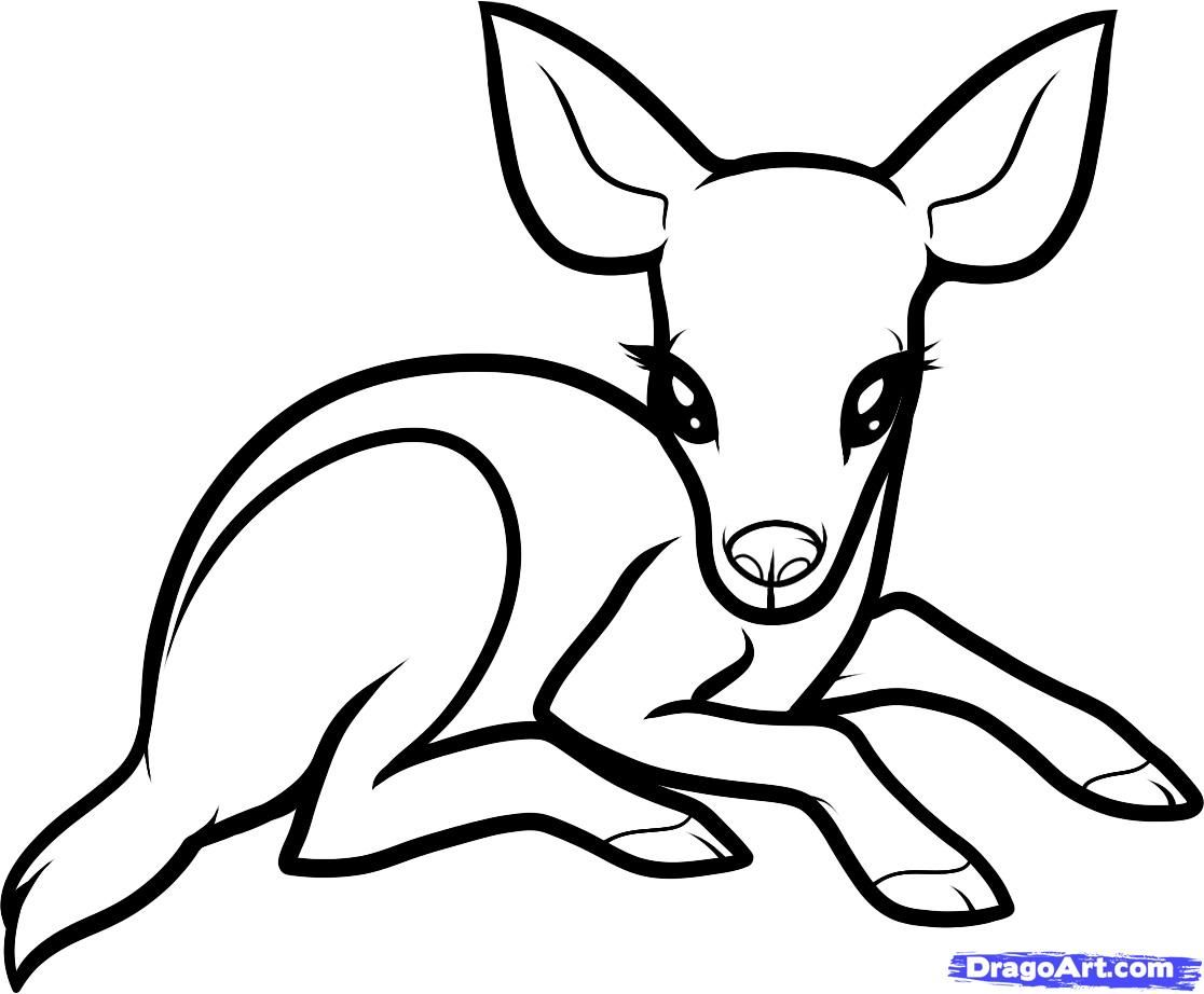How To Draw A Baby Deer, Baby Deer, Step By Step, Forest Animals