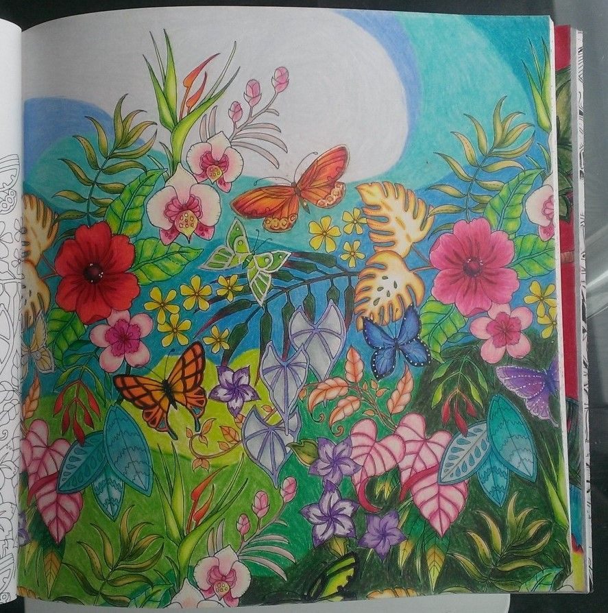 Magical Jungle Colouring Book Johanna Basford Butterflies And