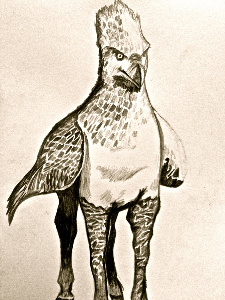 4 Buckbeak Drawing Cartoon For Free Download On Ayoqq Org
