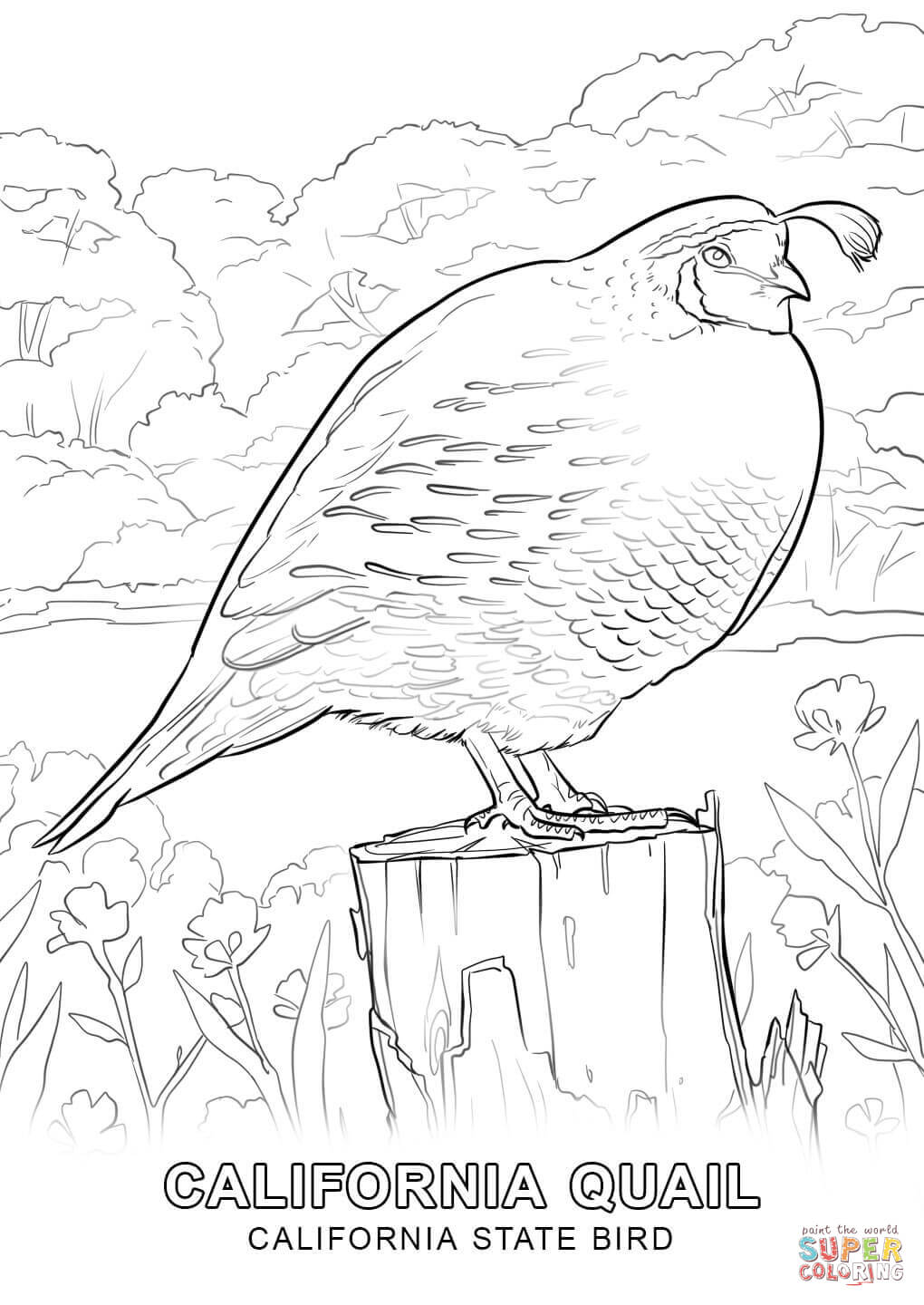 California State Bird Coloring Page