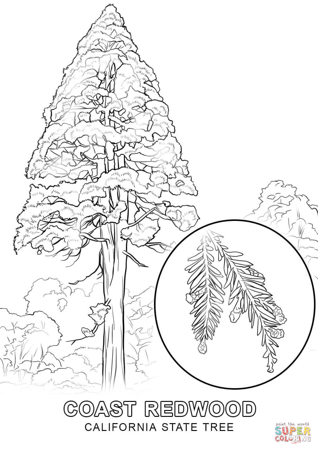 California State Tree Coloring Page