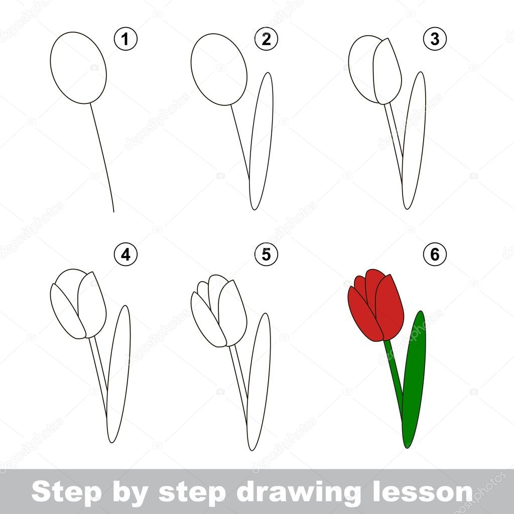 Drawing Tutorial  How To Draw A Tulip — Stock Vector