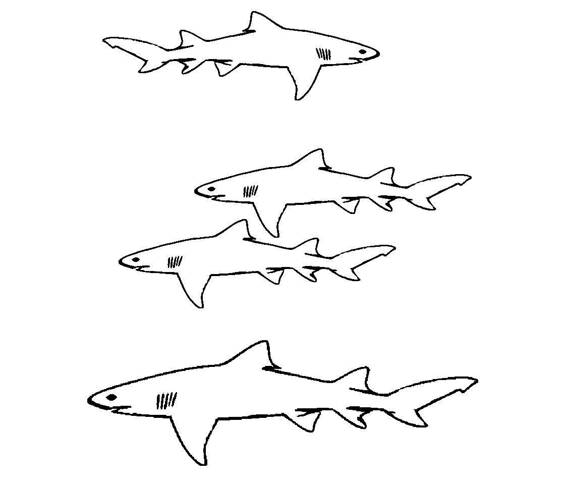 Dibujos De Tiburones Para Colorear Hd