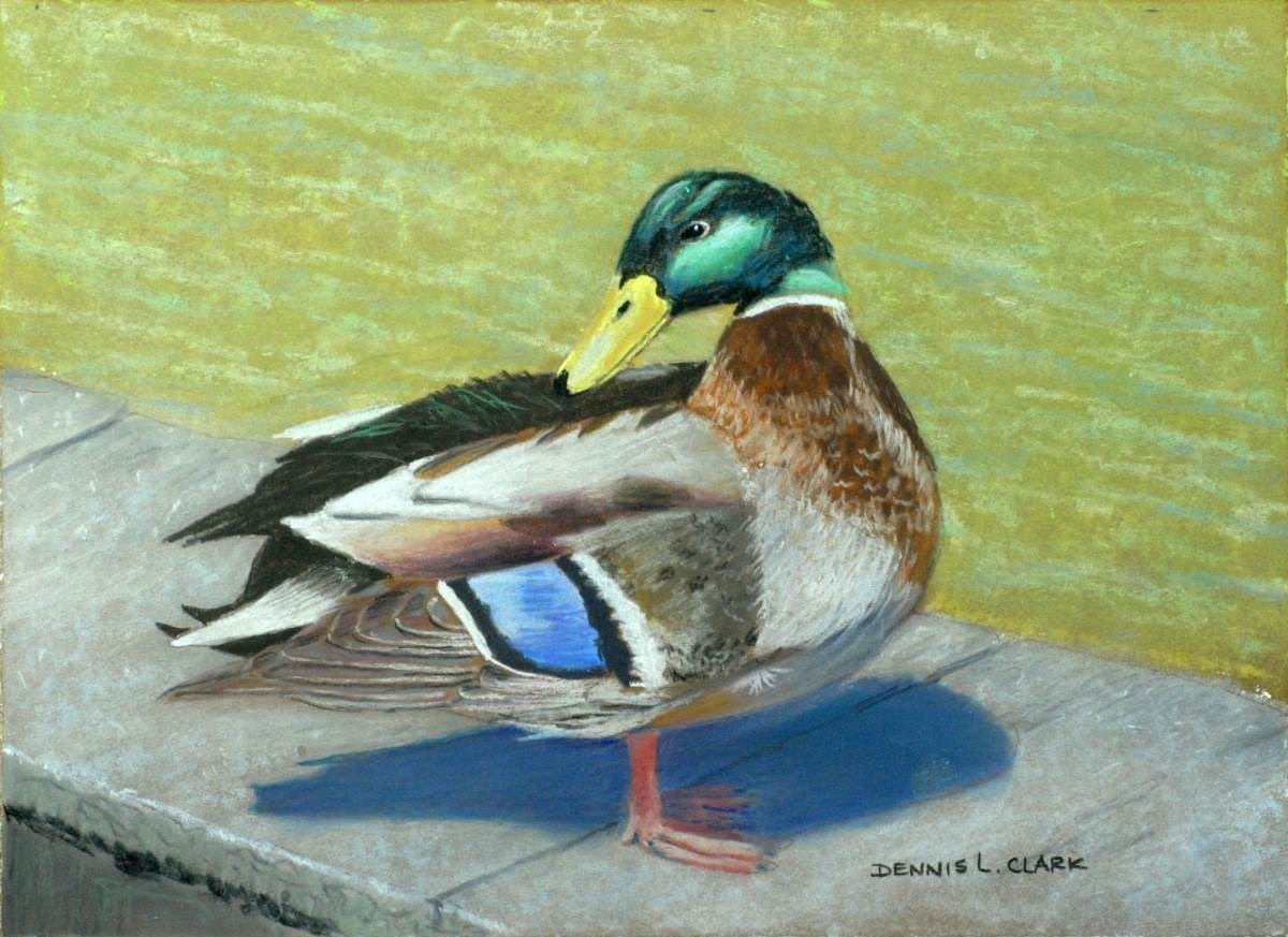 How To Draw Mallard Duck At Pond In Pastel — Online Art Lessons