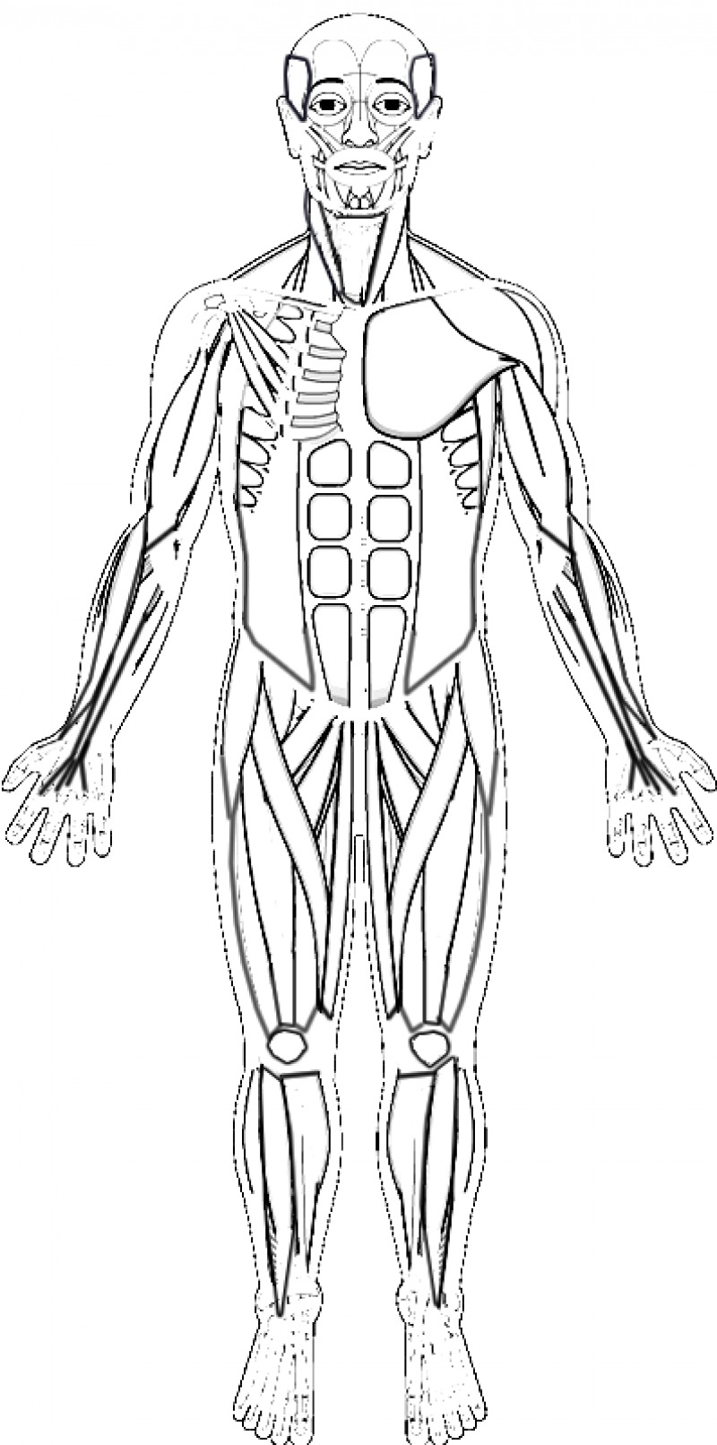 Sarcomere Coloring Worksheet Answers