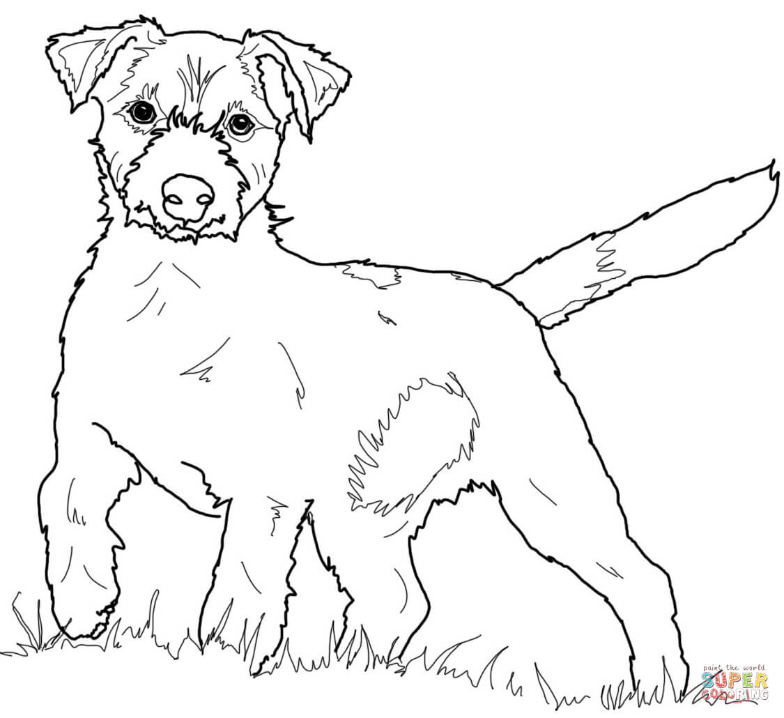 Jack Russell Terrier Coloring Page