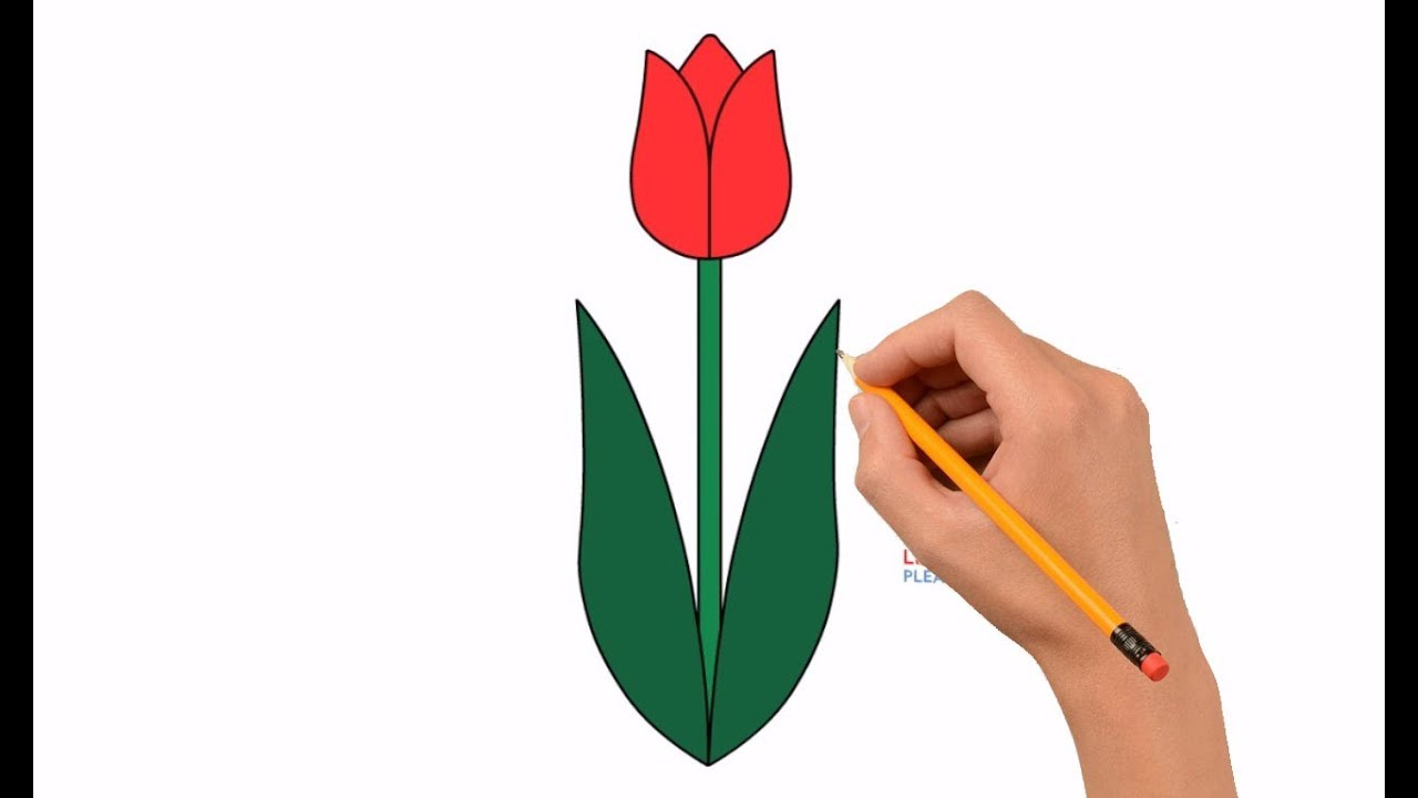 How To Draw A Tulip Flower Step By Step Easy For Kids