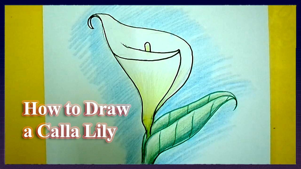 How To Draw A Calla Lily Step By Step