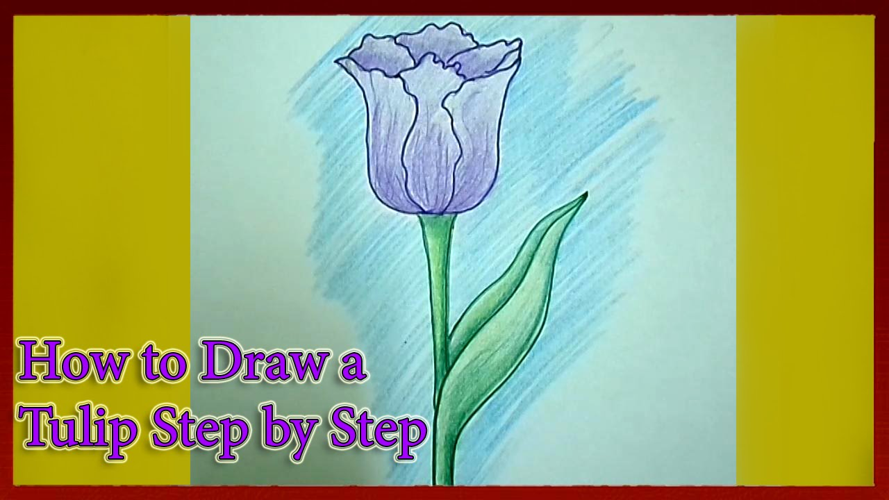 How To Draw A Tulip Flower Step By Step