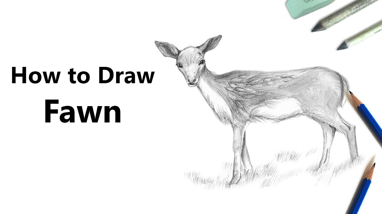How To Draw A Baby Deer Aka Fawn With Pencils [time Lapse]