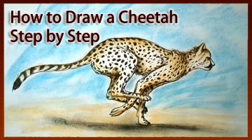 How To Draw A Cheetah Step By Step