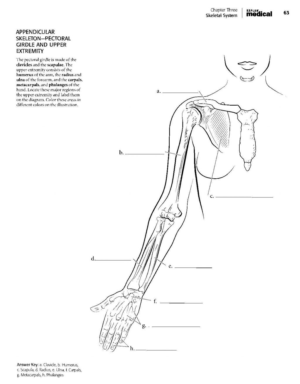 Coloring Page ~ Medical Coloring Book Cool Stock 18cute Anatomy