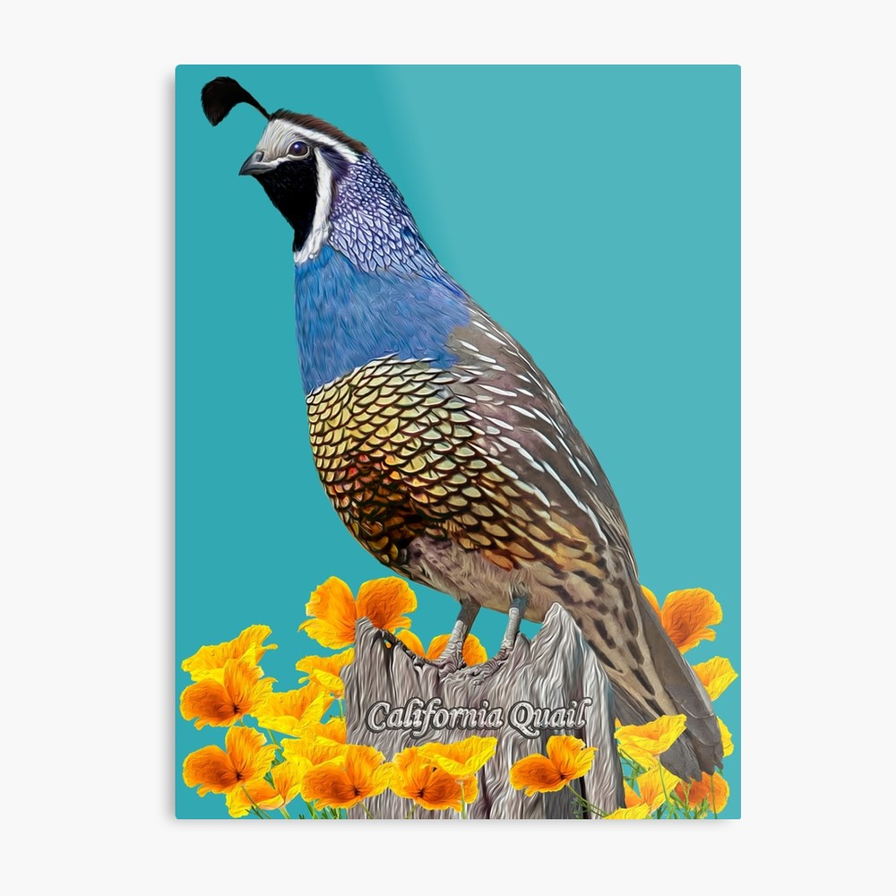 California State Bird And Flower  Metal Print By Skyviper