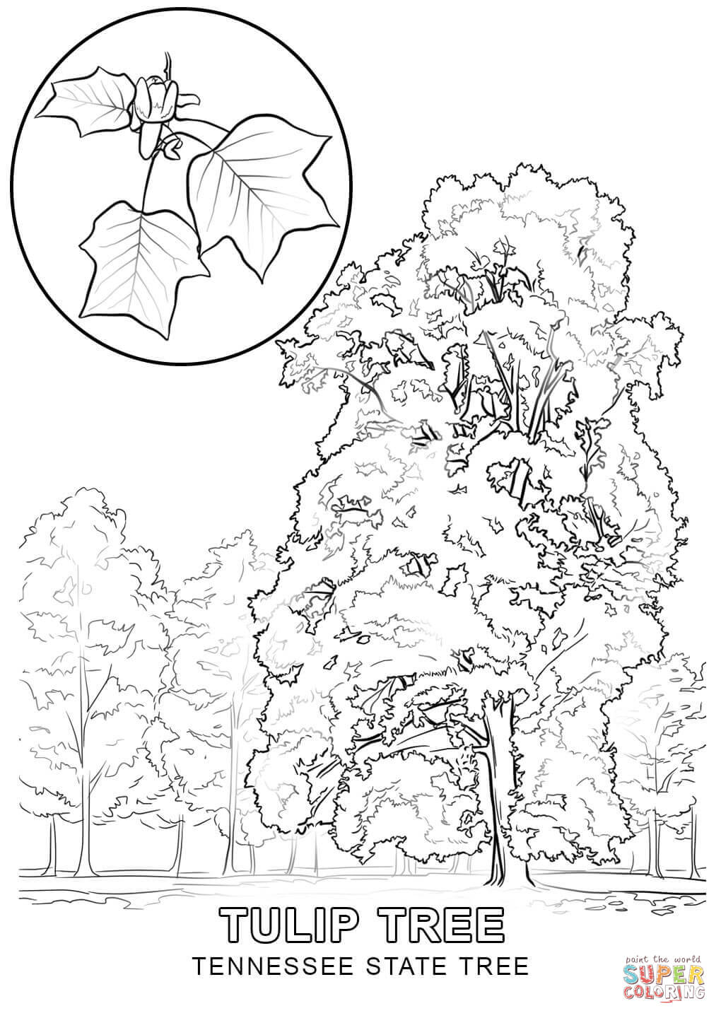 Tennessee State Tree Coloring Page