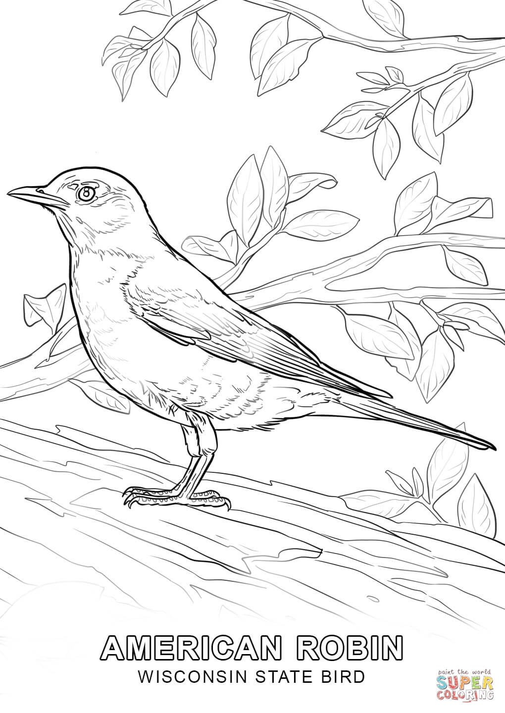 Wisconsin State Bird Coloring Page